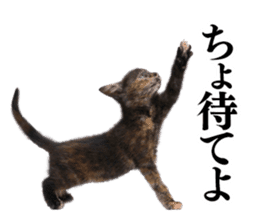 Cat Photo Stickers 03 sticker #13949761