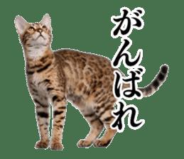 Cat Photo Stickers 03 sticker #13949762