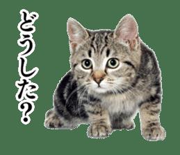 Cat Photo Stickers 03 sticker #13949764