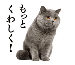 Cat Photo Stickers 03 sticker #13949765