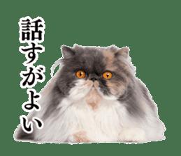 Cat Photo Stickers 03 sticker #13949766