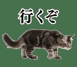 Cat Photo Stickers 03 sticker #13949767