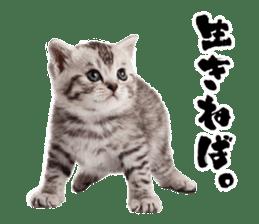Cat Photo Stickers 03 sticker #13949770