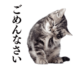 Cat Photo Stickers 03 sticker #13949772