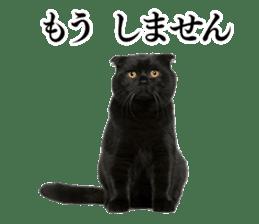 Cat Photo Stickers 03 sticker #13949775