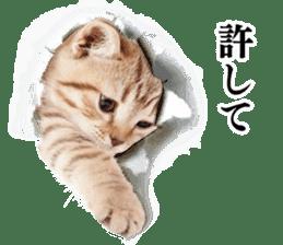 Cat Photo Stickers 03 sticker #13949776