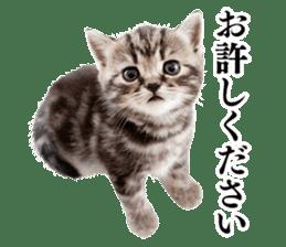 Cat Photo Stickers 03 sticker #13949777