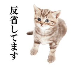 Cat Photo Stickers 03 sticker #13949778