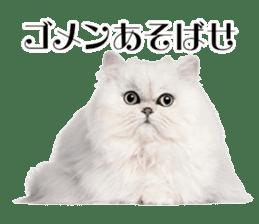 Cat Photo Stickers 03 sticker #13949780