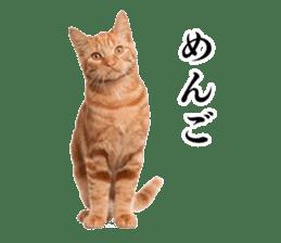 Cat Photo Stickers 03 sticker #13949781