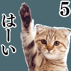 Cat Photo Stickers 05