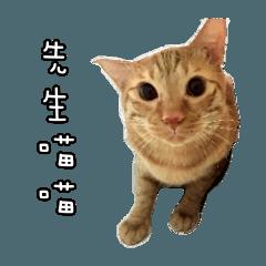 Mr.Mr Meow Meow