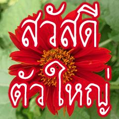 สติ๊กเกอร์ไลน์ ดอกไม้สวัสดี ทุกวัน อักษรตัวใหญ่ๆ