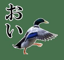 Real Bird sticker #14106342