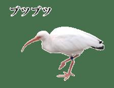 Real Bird sticker #14106344