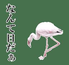 Real Bird sticker #14106346