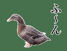 Real Bird sticker #14106348
