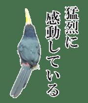 Real Bird sticker #14106351