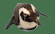 Real Bird sticker #14106354