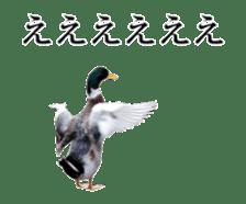 Real Bird sticker #14106361