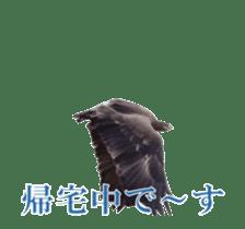 Real Bird sticker #14106364