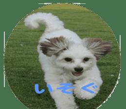 "Let's go ""SORA"" sticker #14119689"