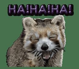Naughty raccoon(English) sticker #14156390