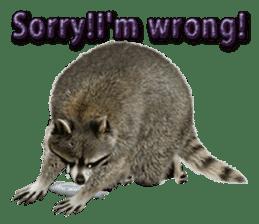 Naughty raccoon(English) sticker #14156391