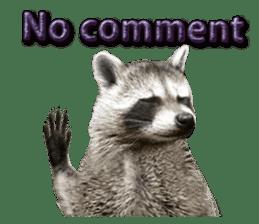 Naughty raccoon(English) sticker #14156394