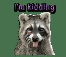 Naughty raccoon(English) sticker #14156395