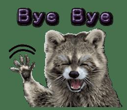 Naughty raccoon(English) sticker #14156397