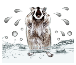 Naughty raccoon(English) sticker #14156398
