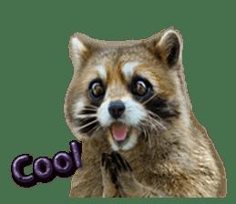 Naughty raccoon(English) sticker #14156399