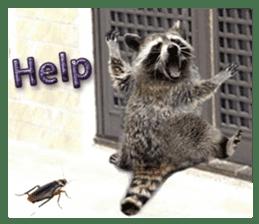 Naughty raccoon(English) sticker #14156400