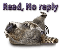 Naughty raccoon(English) sticker #14156401