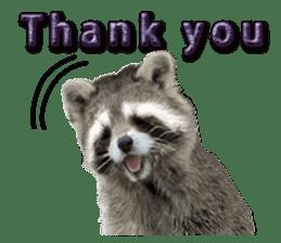 Naughty raccoon(English) sticker #14156402