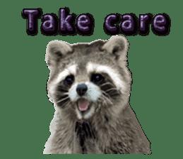 Naughty raccoon(English) sticker #14156404