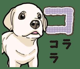 Banana's puppy Labrador retriever sticker #14166427