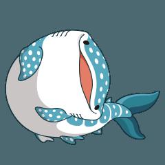 spot whale shark