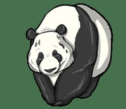 PANDA!! PANDA!! sticker #14198168
