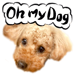Dog Talk!!with friends, Photos,Japanese