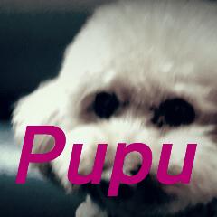 I am Pupu 1