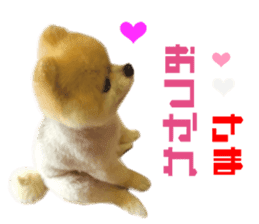 Real DOG Pomeranian -BOO- sticker #14377832