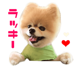 Real DOG Pomeranian -BOO- sticker #14377836