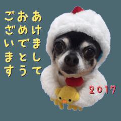 Happy New Year Chicken chihuahua 2017