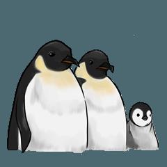 serious penguin
