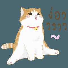 ดีโน่แมวส้ม 2
