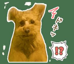 Cute Dog Kotaro Chan By Petsta Sticker 14519069