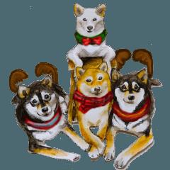 Shiba Inu Sisters and friends - 4