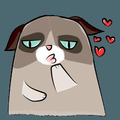 Cute Grumpy Cat